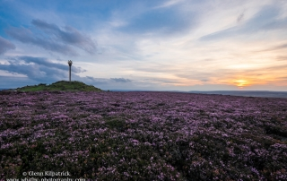 Danby Beacon - heather In Bloom - North York Moors
