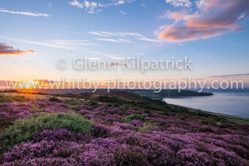 Robin Hoods Bay Heather At Sunset