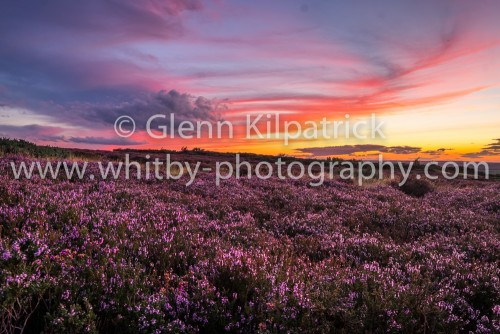 Ravenscar Heather At Sunset