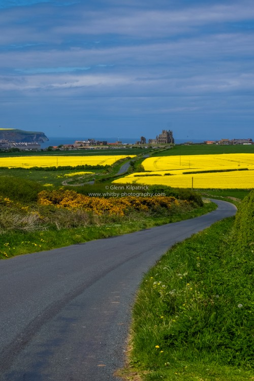 Hawsker Lane Abbey Fields In yellow (Portrait Orinetation)