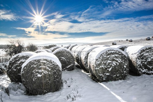 Winter Hey Bales At Lythe