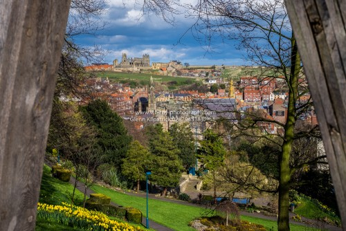 Whitby Abbey From Pannett Park With Spring Daffodils