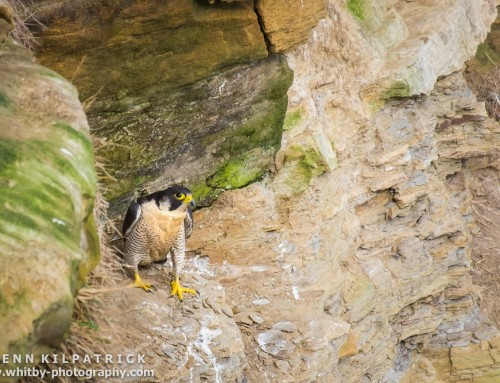 Where To Spot Birds Of Prey In The North York Moors National Park