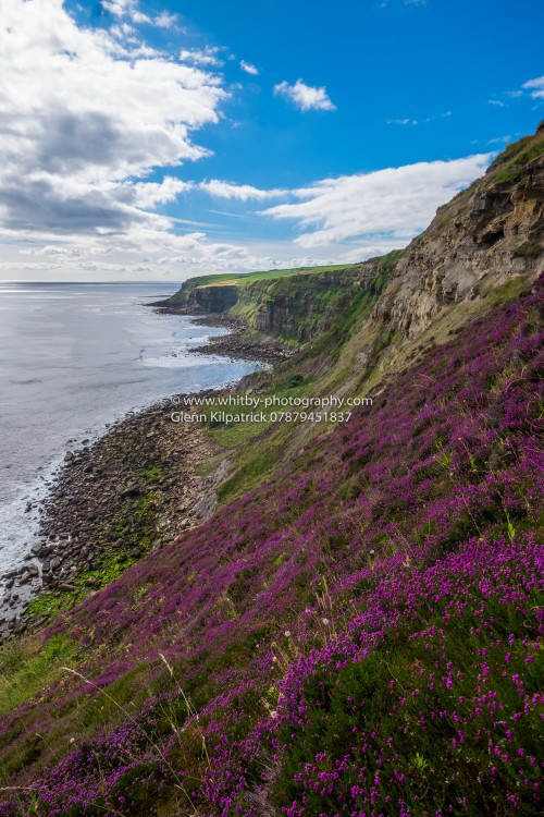 Heather Lines Cliffs On The Coast Of The Cleveland Way At Hawsker Bottoms