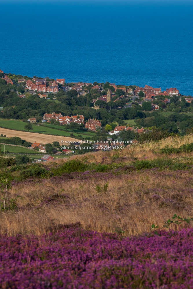 Robin Hoods Bay- Sledgates Heather And A View Of Fylingthorpe