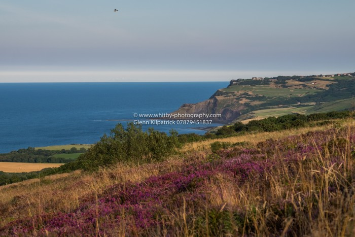 Ravenscar With Heather - Robin Hoods Bay