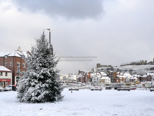 Whitby Christmas Cards - Christmas Tree Covered In Snow