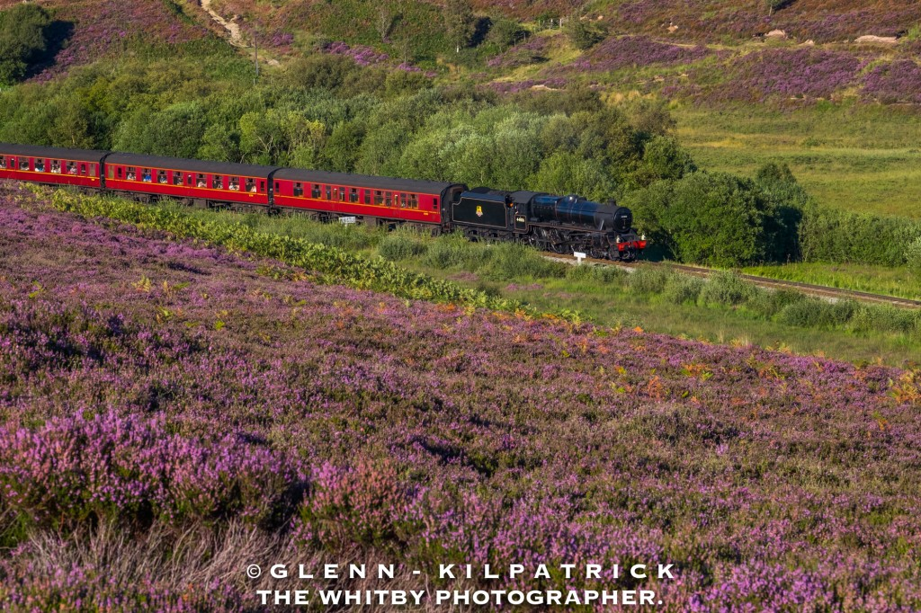 August - North York Moors Railway At Fenn Bogs Wildlife Reserve