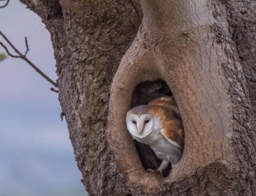 North Yorkshire Moors National Park Birds Of Prey (Update 2017)