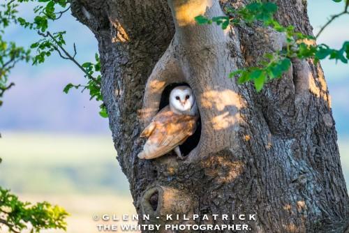 Barn Owls 2018 Calendar By Glenn Kilpatrick