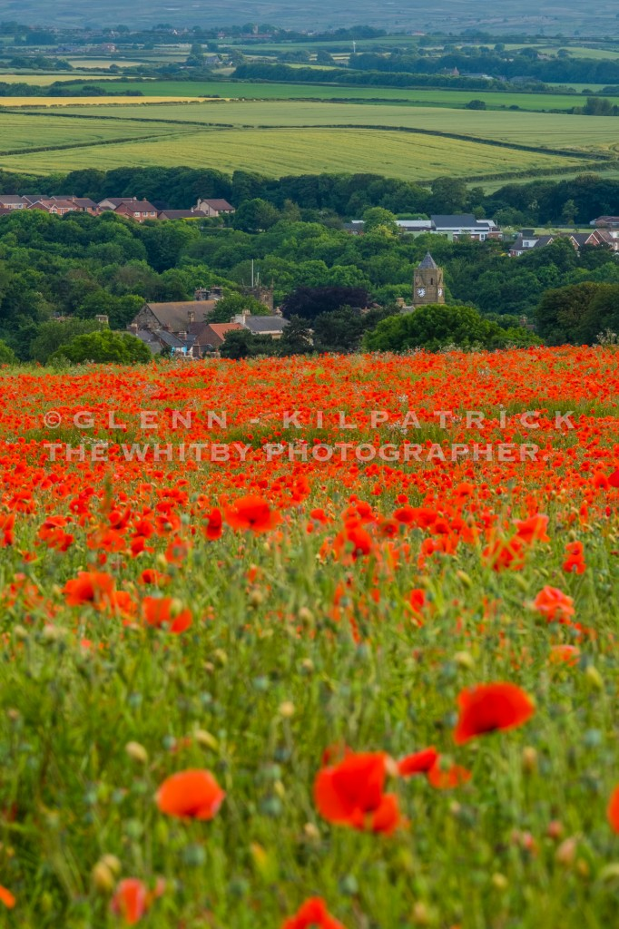 how to draw a poppy field