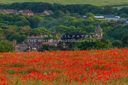 North Yorkshire Poppy Fields