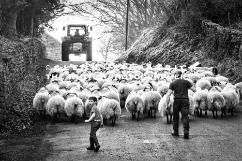 North York Moors Sheep Farming At Danby (1 of 1)