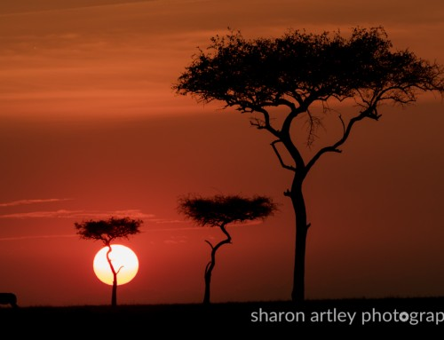 Maasai Mara FaceBook Photo Project – Guest Blog By Sharon Artley.