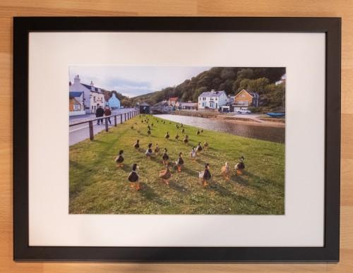 Sandsend Ducks Framed Print
