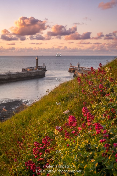 Whitby Flowers At the 199 Steps With Pier View
